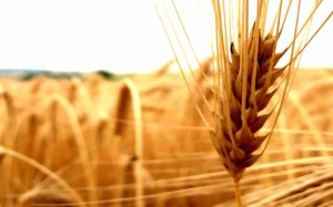 Prestations agriculture